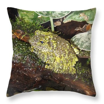 Vietnamese Mossy Frog Throw Pillow by Sara  Raber