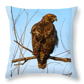 Vigilant Red-tailed Hawk  Throw Pillow