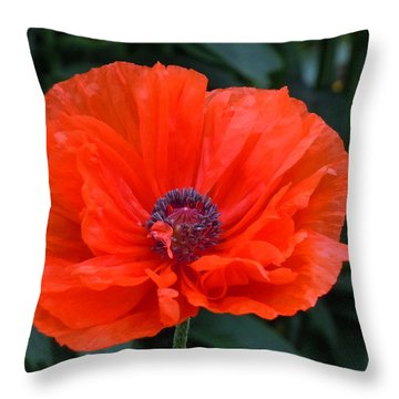 Throw Pillow featuring the photograph Village Poppy by Francine Frank