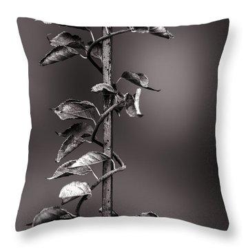 Vine On Iron Throw Pillow by Bob Orsillo