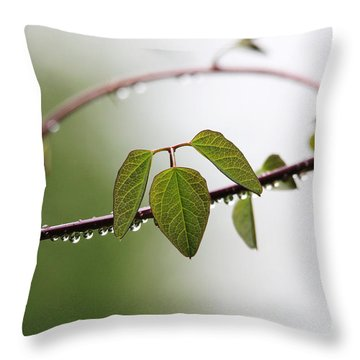 Throw Pillow featuring the photograph Vine With Raindrops by Trina  Ansel