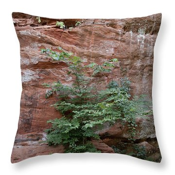 Vines And Canyon Walls Throw Pillow