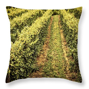 Vines Growing In Vineyard Throw Pillow by Elena Elisseeva