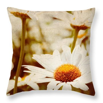 Vintage Daisy Throw Pillow by Beverly Stapleton