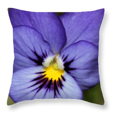 Viola Named Sorbet Blue Heaven Jump-up Throw Pillow by J McCombie