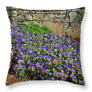 Violas At The Wall Throw Pillow by Larry Bishop