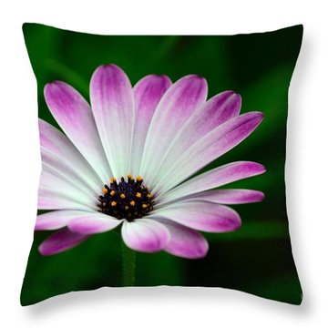 Violet And White Flower Petals With Yellow Stamens Blossoms  Throw Pillow by Imran Ahmed