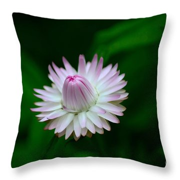 Violet And White Flower Sepals And Bud Throw Pillow