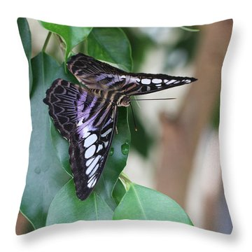 Violet Clipper Butterfly Throw Pillow