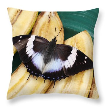Violet-spotted Charaxes Butterfly Throw Pillow