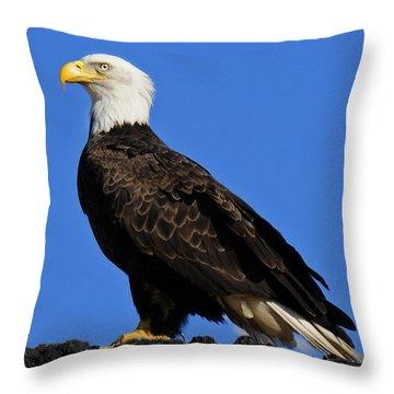 Virginia Bald Eagle Throw Pillow by Lara Ellis