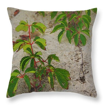 Virginia Creeper At The Beach Throw Pillow