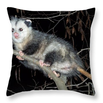 Virginia Opossum Throw Pillow by William Tanneberger