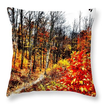 Vivid Pathway Throw Pillow