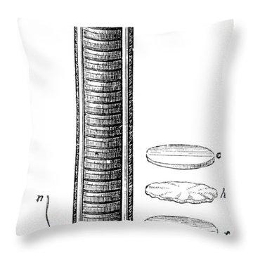 Voltaic Pile, 1800 Throw Pillow by Granger