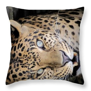 Voodoo The Leopard Throw Pillow