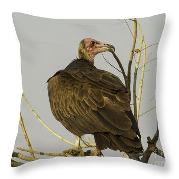 Vulture On The Look Out Throw Pillow