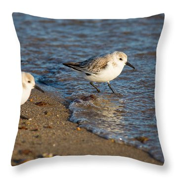 Wading Sanderlings Throw Pillow