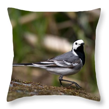 Wagtail's Step Throw Pillow by Torbjorn Swenelius