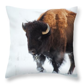 Waiting For Spring Throw Pillow by Jim Garrison