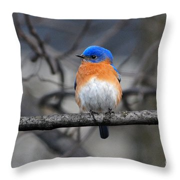 Throw Pillow featuring the photograph Waiting For Spring by Olivia Hardwicke
