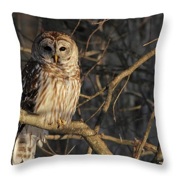 Waiting For Supper Throw Pillow by Lori Deiter