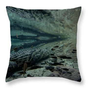 Waiting Gator Throw Pillow