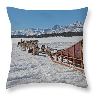 Waiting Sled Dogs  Throw Pillow by Duncan Selby