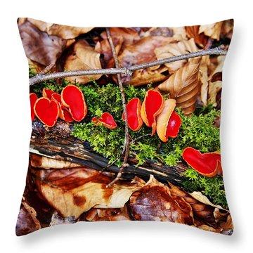Walk In The Woods Throw Pillow by Aidan Moran