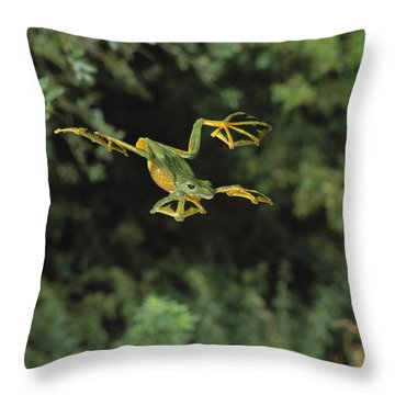Wallaces Flying Frog Throw Pillow by Stephen Dalton