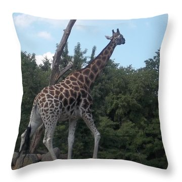 Wandering Griffe Throw Pillow