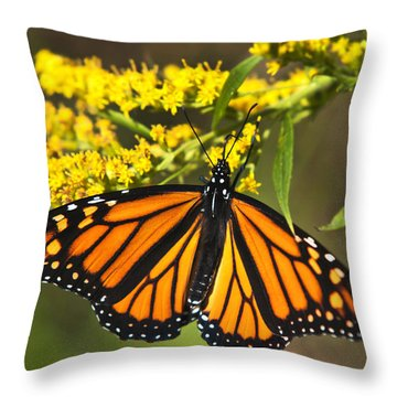 Wandering Migrant Butterfly Throw Pillow by Christina Rollo