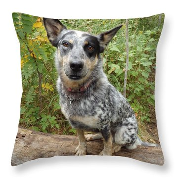 Wanna Play Throw Pillow by James Peterson