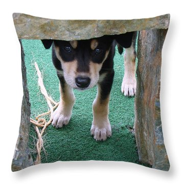 Wannabe Sled Dog In The Yukon Throw Pillow