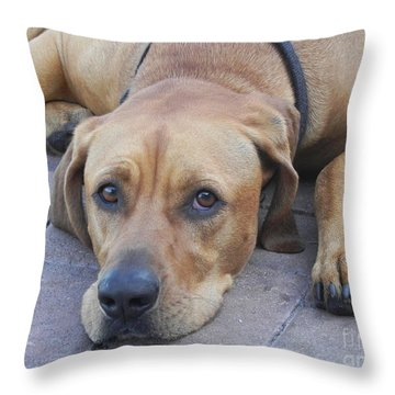 Want To Play  Throw Pillow by Chrisann Ellis