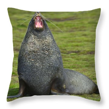 Warning Growl Throw Pillow by Tony Beck