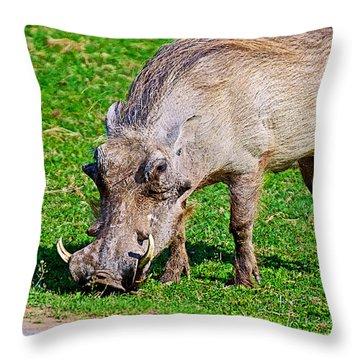 Warthog In Addo Elephant Park Near Port Elizabeth-south Africa  Throw Pillow