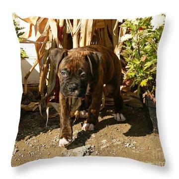 Throw Pillow featuring the photograph Was I Bad? by Carol Lynn Coronios