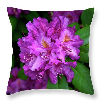 Washington Coastal Rhododendron Throw Pillow by Ed  Riche