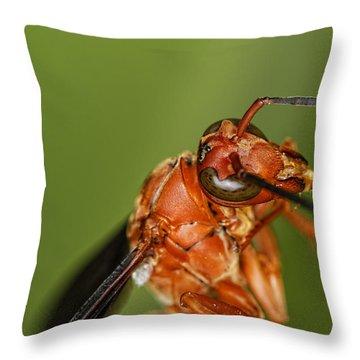 Wasp 1 Throw Pillow