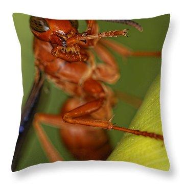 Wasp 3 Throw Pillow