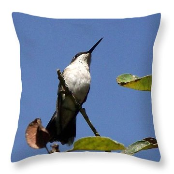 Watchful Female Hummingbird  Throw Pillow by Eunice Miller