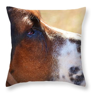 Throw Pillow featuring the photograph Watchful by Mary Zeman