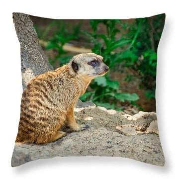 Watchful Meerkat Throw Pillow