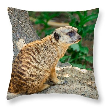 Watchful Meerkat Vertical Throw Pillow