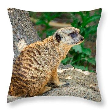 Meerkat Throw Pillows