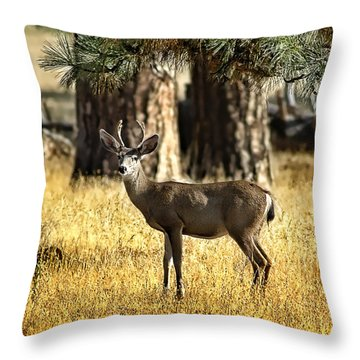 Watchful Young Buck Throw Pillow