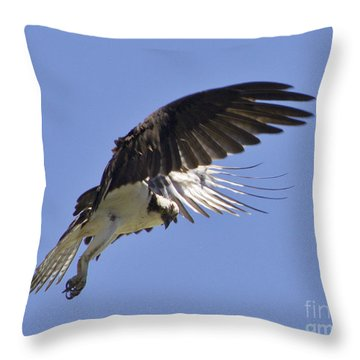 Throw Pillow featuring the photograph Watching 4 by Suzette Kallen