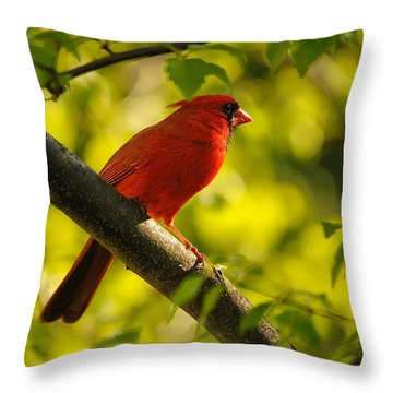Watching The Sun Set Throw Pillow by Lois Bryan