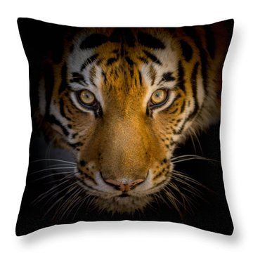 Watching You Throw Pillow by Ernie Echols